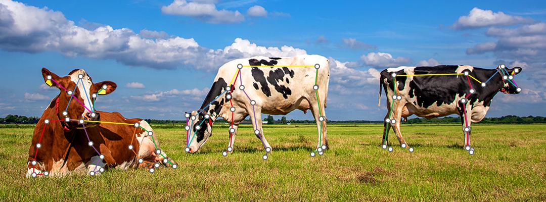 複数の牛の姿勢・行動検知